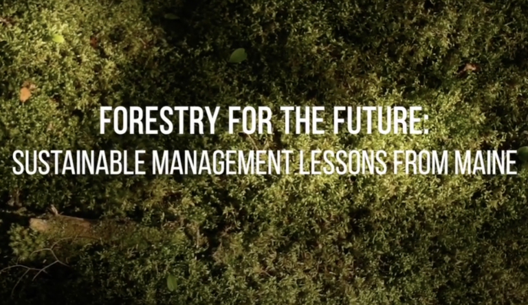 Forestry for the Future: A film introduces forestry to landowners with a 65-year study